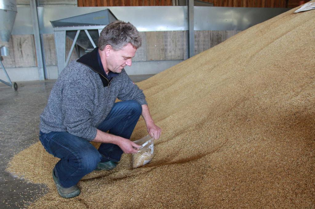 Getreideprobe