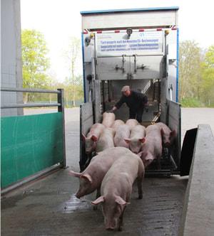 Schweinelieferung