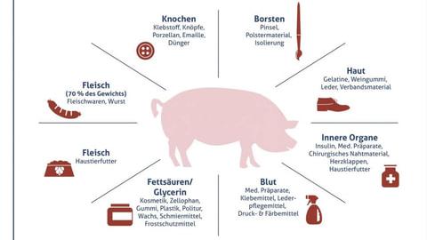 Schlachtschweine